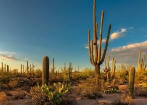 Amerykanie za obniżkami stóp. Trump straszy Meksyk