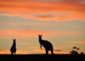 Australijczyk umacnia się po dobrych danych