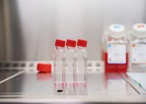 Bioceltix wchodzi w kolejną fazę badań. To kolejny ważny krok dla wrocławskiej spółki szykującej się do debiutu na NewConnect