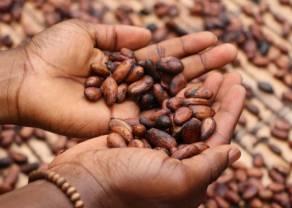 Cena miedzi na drodze do spadkowego tygodnia. Plany limitowania produkcji kakao w Afryce Zachodniej