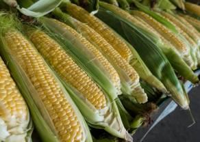 Cena ropy znów przy tegorocznych minimach. Szacunki wzrostu importu kukurydzy do Chin
