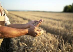 Ceny surowców rolnych rosną z miesiąca na miesiąc - GUS opublikował najświeższe dane