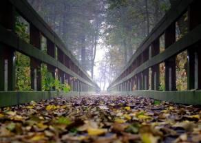 Co kieruje Twoimi decyzjami inwestycyjnymi? Teoria perspektywy.