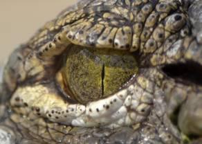 Czego krokodyle mogą nauczyć Cię o tradingu