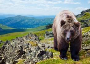 Czy niedźwiedzie zmiażdżą kupujących indeks WIG20 w tym tygodniu? Akcje zagraniczne nie pomagają!