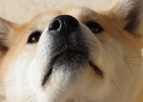 """""""Dogecoin"""" - żart warty ponad 2 mld dolarów"""