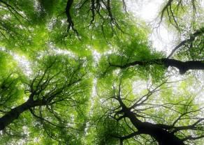Firmy oczekują zmian w podatkach i większych inwestycji w zieloną gospodarkę