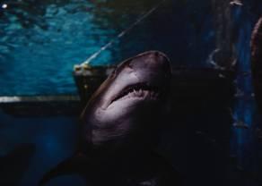 Formacje Triple Crown i Shark Attack czyli jak szybko znaleźć dobry setup? Darmowy webinar