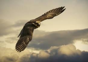 Gołębie i jastrzębie, czyli dwa odmienne sposoby patrzenia na inflację i politykę pieniężną