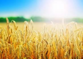 Jak inwestować w towary? Kukurydza, pszenica, kakao. Inwestowanie w produkty rolne w praktyce