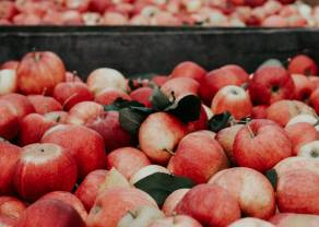 Jak rozegrać jabłko? Prosty setup na Apple