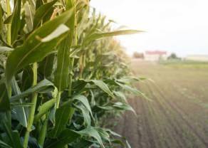 Jedna z najdłuższych w ostatnim dziesięcioleciu fal wzrostów na CORN dobiegła końca? Korekta na notowaniach kukurydzy