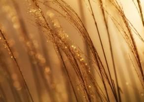 Kiedy pojawi się popyt na złocie?