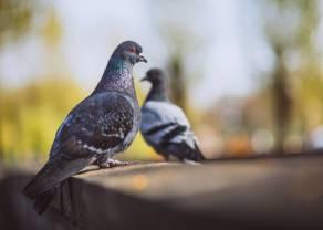 Komentarz walutowy (dolar, euro, frank, funt) – pandemia może zapewnić gołębi Fed, i to na długo!
