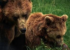Kontrakty terminowe dla WIG20: Niedźwiedzie nie odpuszczają nawet na chwilę