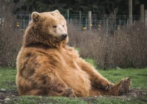 Kontrakty terminowe na WIG20: czy niedźwiedź połakomi się na jeszcze mocniejsze wybicie w dół?