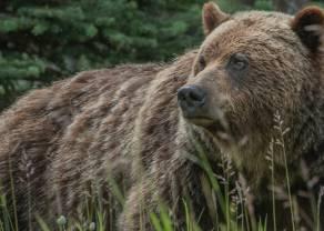 Kontrakty terminowe na WIG20: niedźwiedzie nie odpuszczają!