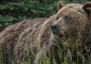 Kontrakty terminowe na WIG20: niedźwiedzie nie powiedziały ostatniego słowa