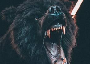 Kontratak Niedźwiedzi komplikuje sytuację na kontraktach na WIG20