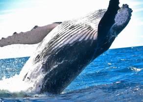 Kurs bitcoina jest zagrożony - wieloryb przepowiada spadki kryptowaluty bitcoin BTC