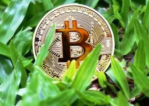 Kurs Bitcoina powyżej 50 000 dolarów. Ile zapłacimy za Ethereum, Litecoina i Ripple? Kursy kryptowalut 5 października 2021