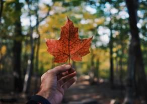 Kurs dolara kanadyjskiego się umocni? Futures na DAX wyznacza nowe historyczne szczyty