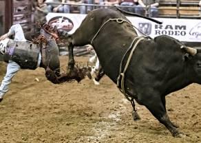 Na indeksie WIG20 rynkowe byki starają się odrobić straty po porannym ciosie podaży