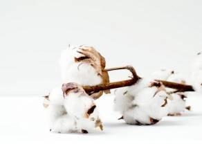 Notowania Bawełny po kolejnych spadkach dotarły do linii trendu wzrostowego. Analiza wykresu cen Cotton