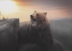 Ogromna ilość niedźwiedzi w Stanach Zjednoczonych. Czy to już apogeum pesymizmu?