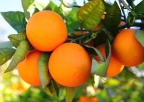 Orange mocno w górę. PKO BP na zielono. CCC, Cyfrowy Polsat i Dino na solidnym plusie. Alior Bank i mBank na czerwono. Pekao lekko zyskuje