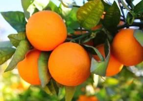 Orange przerosła oczekiwania. Cyfrowy Polsat i Play też w górę. Mocna sesja dla CCC i Dino. mBank ze wzrostem o prawie 7%. PKO BP na mocnym plusie