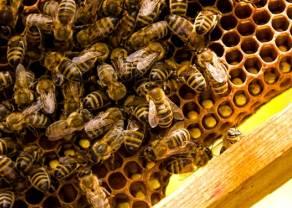 Pekao w trosce o pszczoły
