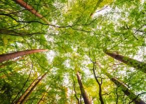 Posadź las z EFL! Warmia zyska 30 tysięcy drzew