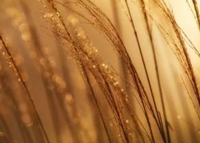 Powrót do wzrostów na złocie?