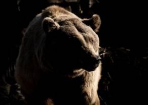 Powrót niedźwiedzi na Dow Jones. Spada również S&P500 i DAX!