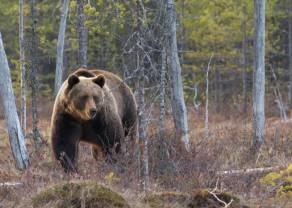 Szansa dla niedźwiedzi na indeksie DAX