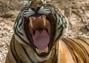 Upadek Azjatyckich Tygrysów