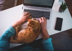 Zdjęcia z pracy zdalnej mogą zdradzić hasło do banku. W jaki sposób cyberprzestępcy mogą skorzystać z informacji na zdjęciach z domowego biura?