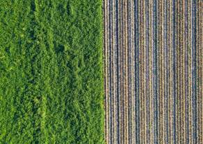 Biomasa. Zmiany na rynku biomasy