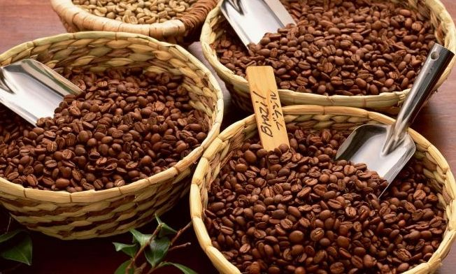 Arabica i robusta – jedna kawa, dwa światy. Czym wyróżniają się obydwie odmiany kawy?