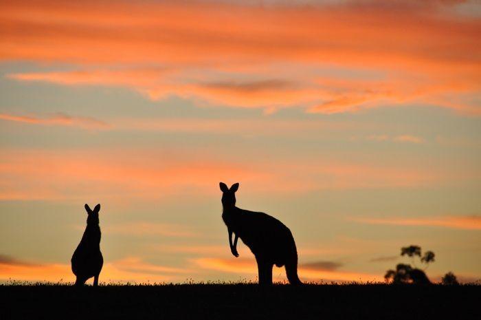 bezrobocie w australii