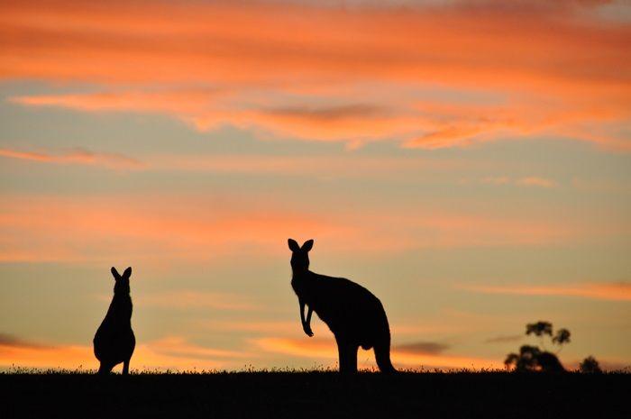 gospodarka Australii