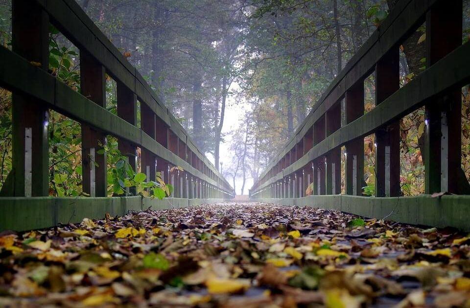 Teoria perspektywy - podejmowanie decyzji inwestycyjnych w świetle prospect theory