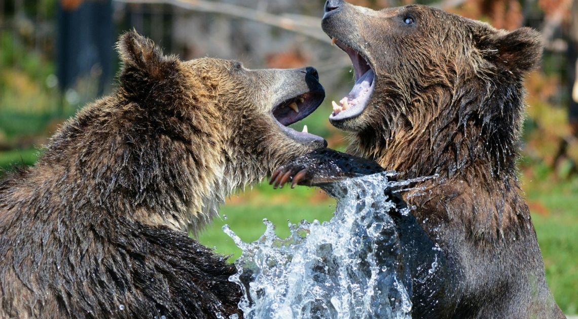 Drastyczny spadek liczby rynkowych byków i wzrost ilości niedźwiedzi w USA