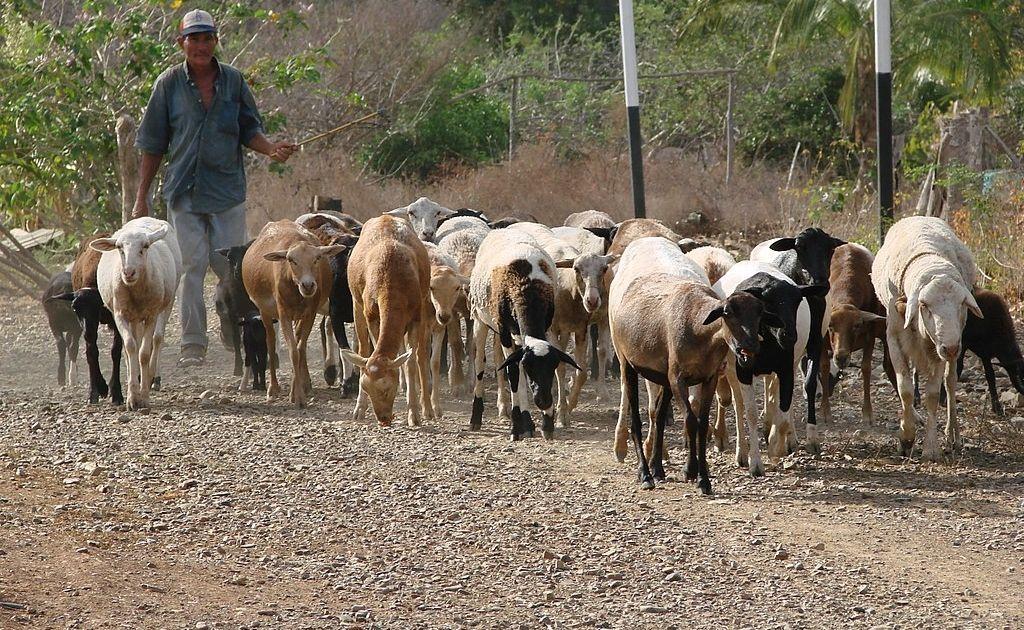 Hiperinflacja zmusiła Wenezuelę do przemytu... Bydła