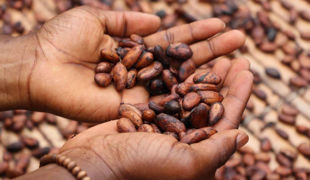 IEA: popyt na surowce energetyczne w 2020 r. znacząco spadnie. Notowania kakao w USA w konsolidacji