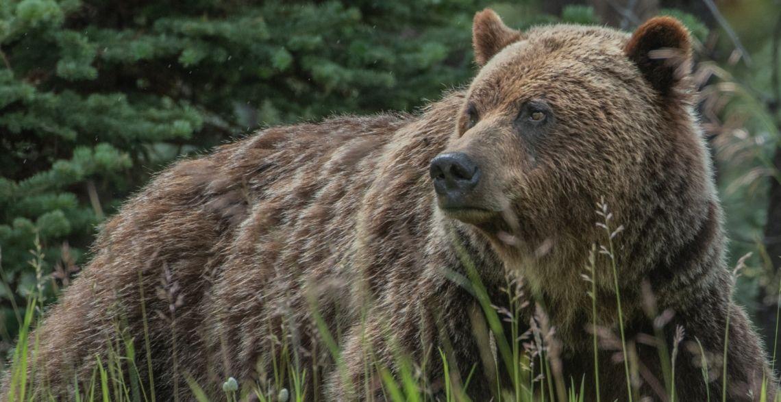 Indeks WIG20 w dół. Niedźwiedzie zdominowały giełdy. Notowania giełdowe