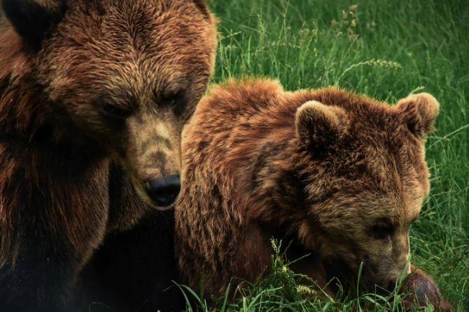 Kontrakty na WIG20: czy Niedźwiedzie pokażą moc?