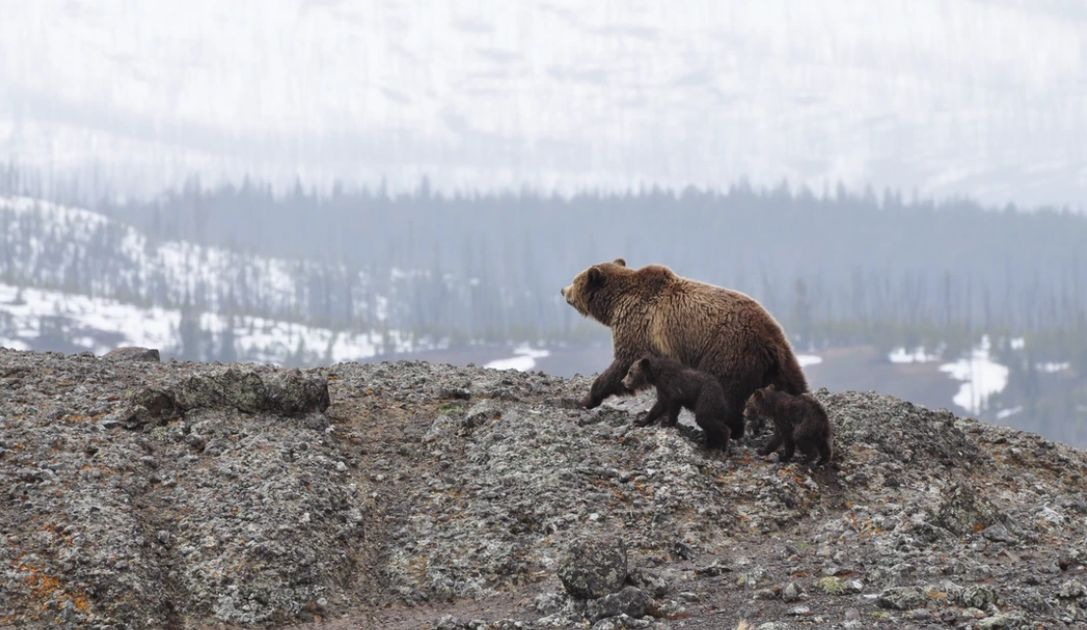 Niedźwiedzie wracają na rynek, czas na kolejną falą wyprzedaży? Notowania giełdowe