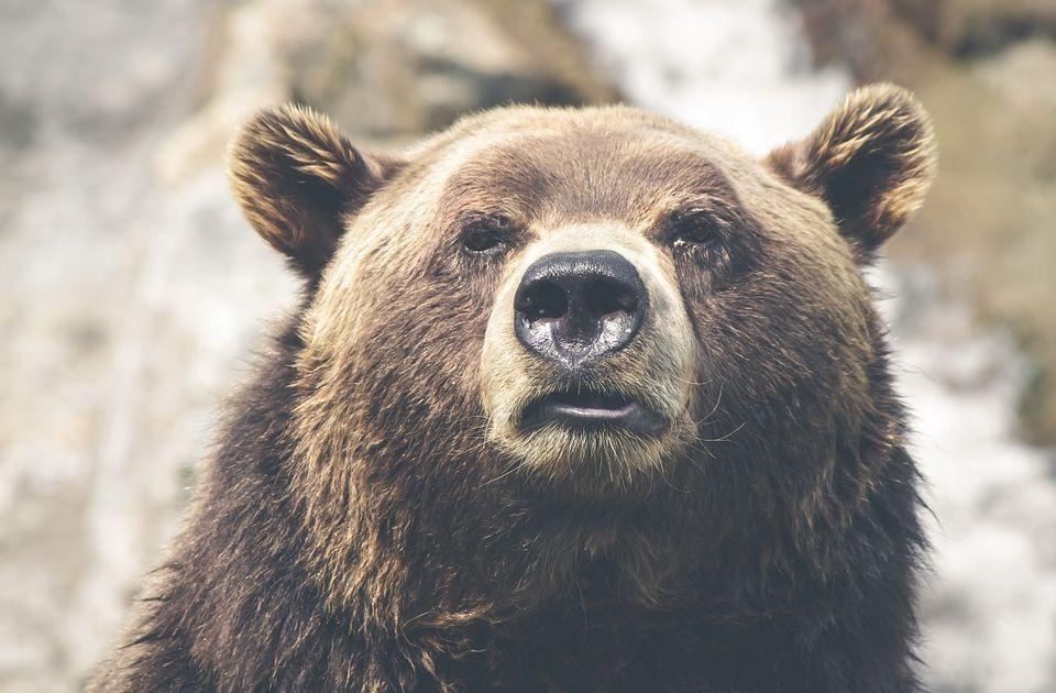Niedźwiedzie zdominowały GPW